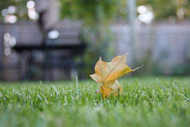 Økologi & Bæredygtighed