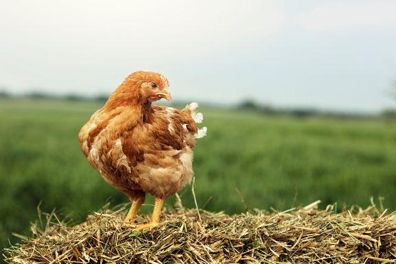 Danpo lancerer nyt brand: De Danske Familiegårde vil sætte dyrevelfærd på dagsordenen